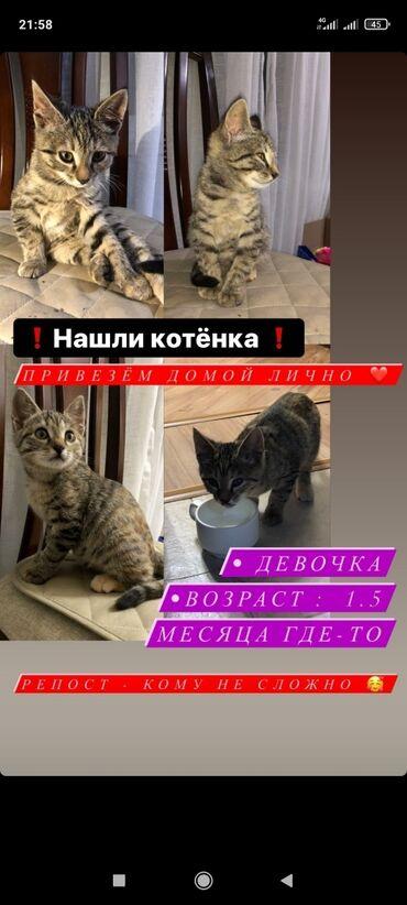10 объявлений | ЖИВОТНЫЕ: Коты