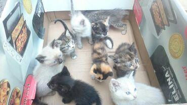 Отдам котят в добрые руки!!!Возраст 1.5 месяца. Город Кара-Балта