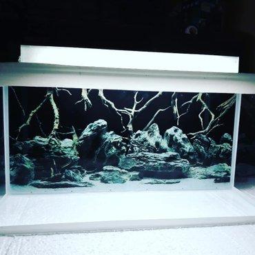 Bakı şəhərində ENDIRIM  teze akvarium  uzunu 60sm  hundurluyu 35 sm qapaqla  eni 20sm