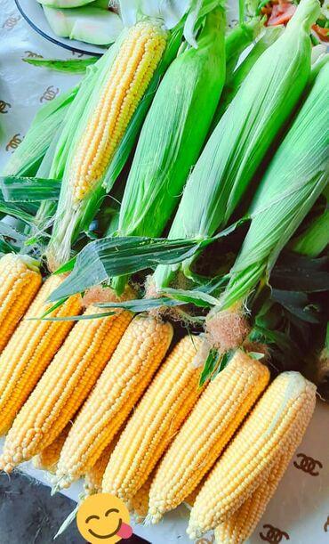 Дом и сад - Беловодское: Продаю Кукуруза сладкая турецкое сорт Барон.60 сотих оптпом сатам