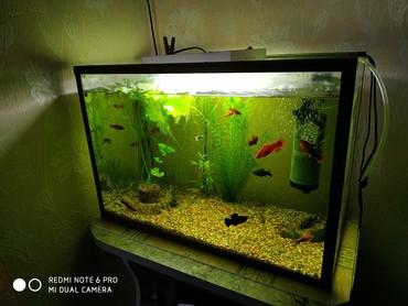 Продаю Срочно аквариум с рыбками 5 в Бишкек