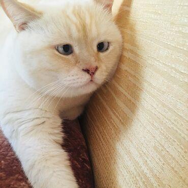 Красавчик кот 1,5 года. Кастрирован. Привит. Проблахован