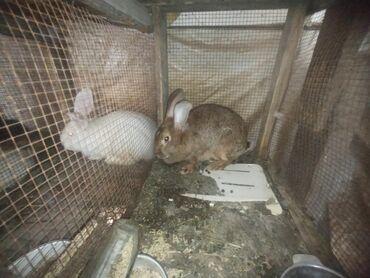 Продаю крольчат микс