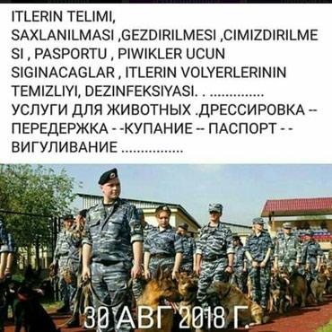 Bakı şəhərində EV HEYVANLARİNA XİDMƏTLƏR .