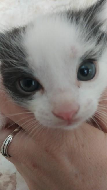 Отдам котят в хорошие руки в Бишкек