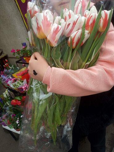Тюльпаны по 100 и 120 сом букеты доставка платная по городу