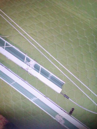 Venecijaneri merim veličinu. Svjetlo zelena boja. - Palic