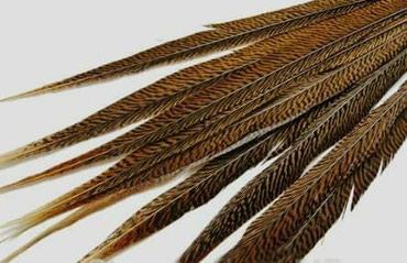 Продаю перья золотого фазана в Бишкек