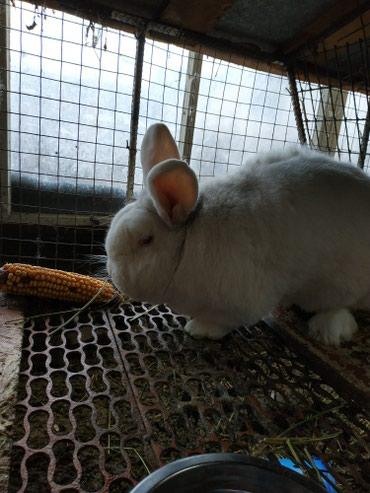 Крольчата разных пород и возрастов в Кок-Ой