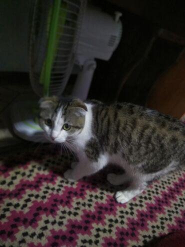 Находки, отдам даром - Пригородное: Потерялась кошка Эля, есть вознаграждение