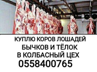 Животные - Кара-Балта: Приём скота и вынужденый забой скота в колбасный цех любой упитанности