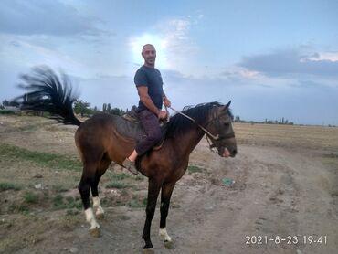 76 объявлений | ЖИВОТНЫЕ: Продаю | Жеребец | Полукровка | Конный спорт