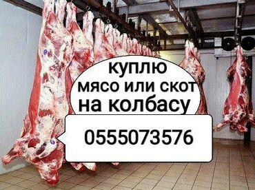купить постельное белье для гостиниц в розницу в Кыргызстан: Куплю на колбасный коров лошадей бычков и тёлок любой