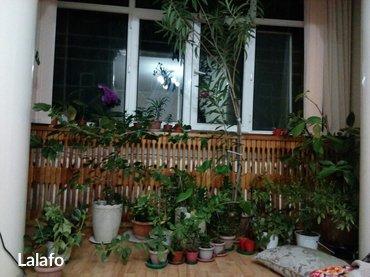 Разбирайте цветы по РАСПРОДАЖНЫМ ЦЕНАМ. отлично подойдет для дома и оф в Бишкек