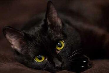 ищу кошку в Кыргызстан: Отдам даромОтдам даром кошку в добрые руки. К лодку приучен. Забирать