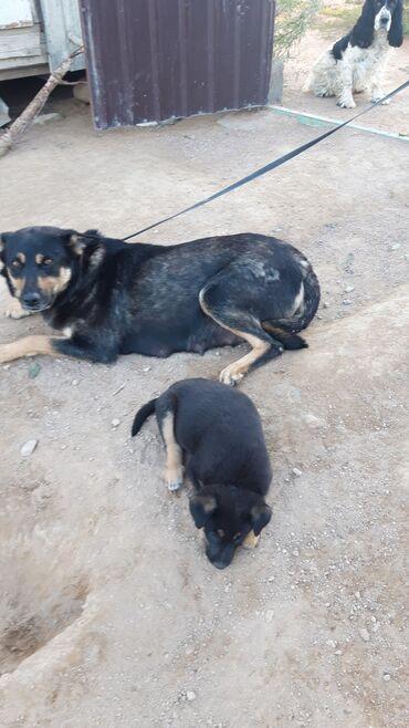 Животные - Бактуу-Долоноту: Кому щеночков 🥰им скоро будет 2 месяца. Щенки проглистованы и от блох