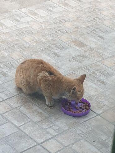 котенок в Кыргызстан: Котёнок мальчик отдадим бесплатно в добрые руки сколько месяцев не и