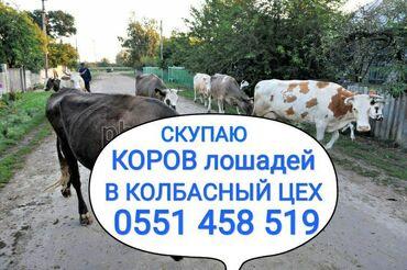 Скупаем в колбасный цех: коров лошадей бычков тёлок и вынужденный