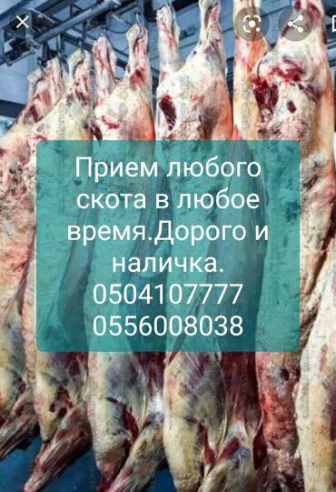 скутер suzuki в Ак-Джол: Скупка мясо и скота для колбасного цеха
