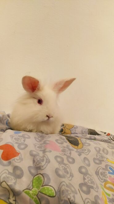 Продается декоративный кролик чистый пушистый белый маленький