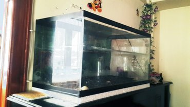 Bakı şəhərində Ölcüləri 80x40x40 sm olan akvarium (akvaterrarium)  satılır. Yaxşı