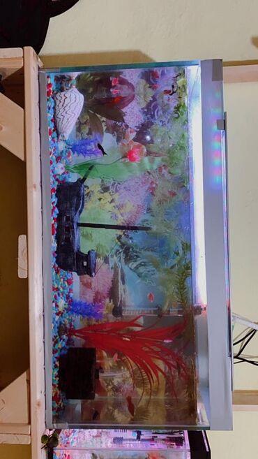 Принимаем заказы на аквариумы любого размера Все качественно а главное