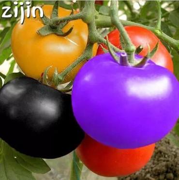 Bakı şəhərində Rengli pomidorun toxumlari.Isteyen wpa yazsin.