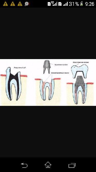 услуги стоматолога в Кыргызстан: Услуги стоматолога: лечение и протезирование- !