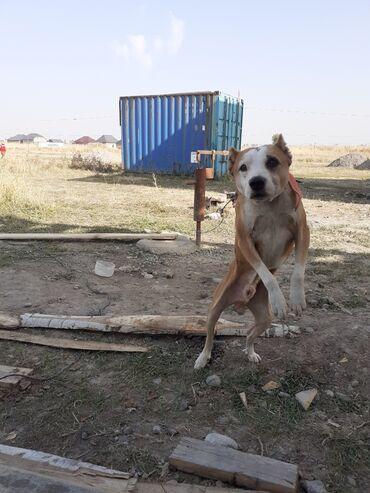 194 объявлений | ЖИВОТНЫЕ: Собаки