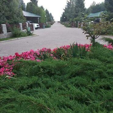 Отдых на Иссык-Куле - Сокулук: Сдается котедж в цо Радуга!со всеми удобствами !до пляжа 5минут