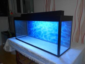 Bakı şəhərində Teze akvarium wekildeki okean gorunuwlu