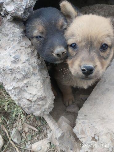 Симпатичные щенки ищут добрых хозяев! Будут служить и любить!