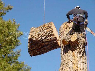 Спил деревьев любой сложности! Быстро качественно и недорого !