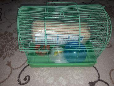 Клетка для джунгариков хомяков. Опилк, шарик, игровая тыква,поильник,и