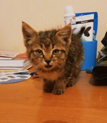 Котенок, предположительно мальчик. Возраст около месяца. Нашли недавно