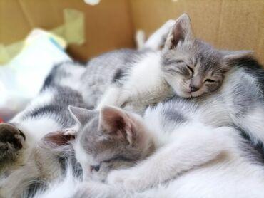 Donji ves - Srbija: Trazi se dom za ove male lepotice ❤Mace su stare mesec i 7 dana