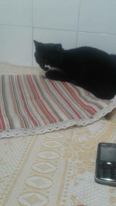 88 объявлений   ЖИВОТНЫЕ: Пристраивается в добрые руки котик Филя. Возраст до года. Очень