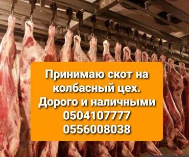 ford mustang 1969 купить в Ак-Джол: Куплю любой вид скотадорого
