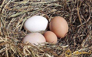 Jaja - Srbija: Organska jaja- 100 kom za 1500din.Prodajem organska jaja od mladih i