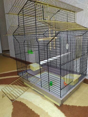 накидка на клетку попугая в Кыргызстан: Продаю большую клетку для попугая! 45Х35Х60