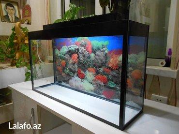 Bakı şəhərində teze akvarium uzunu 70 sm hundurluyu 40sm qapaqla 44sm eni 20 sm