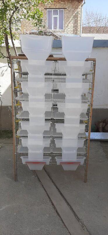 С/х животные - Кыргызстан: Перепилиновый клетка заводской новая всё в комплекте