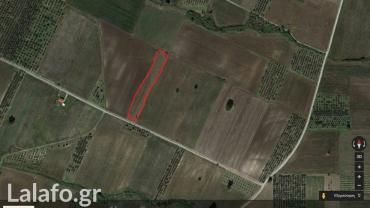 Πωλείται χωράφι 5 στρέμματα στον Κορινό Πιερίας.  σε Πιερία
