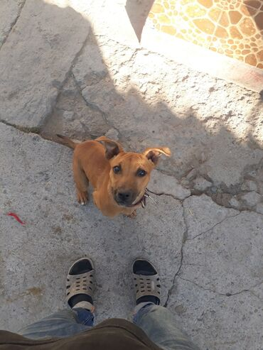 Пропала собака или (украли) кто видел или нашел прошу сообщить по