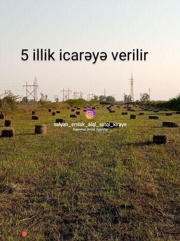 İcarəyə verilir - Azərbaycan: İcarəyə verilir 150 sot Kənd təsərrüfatı vasitəçidən