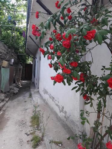 nzs heyet evleri - Azərbaycan: Satış Evlər : 120 kv. m, 5 otaqlı