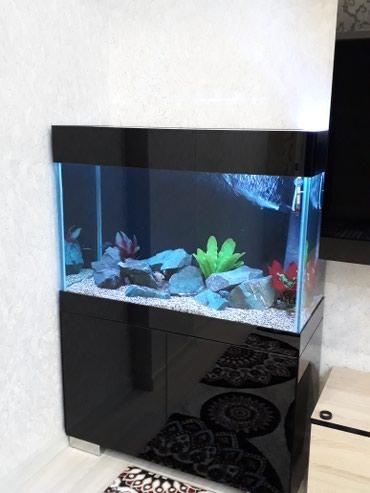 Животные - Кыргызстан: Изготовление аквариумов любой сложности в Aqua Magic Company!!!. Надеж