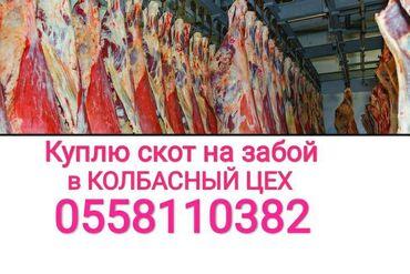 купить корову в бишкеке in Кыргызстан | КОРОВЫ, БЫКИ: Куплю в колбасный цех,:коровлошадейбычков и телоклюбого возрасталюбой