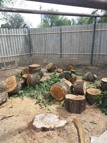 ствол грецкого ореха в Кыргызстан: Пилю деревья, дрова, стволы, и ветки деревьев