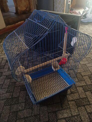 55 объявлений | ЖИВОТНЫЕ: Продаю клетку для попугая, 500 с. Самовывоз. Звоните